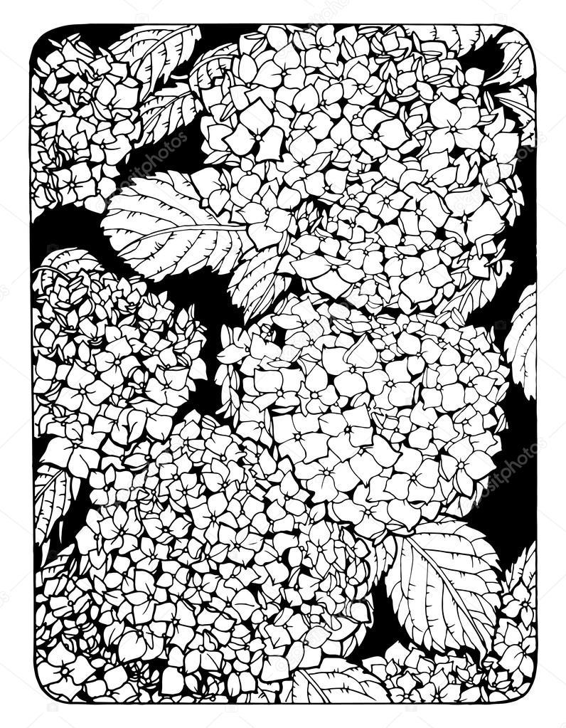 colorare con fiori di ortensia illustrazione vettoriale