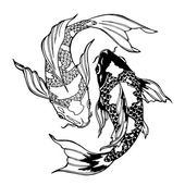 Photo koi fish; ying yang symbol