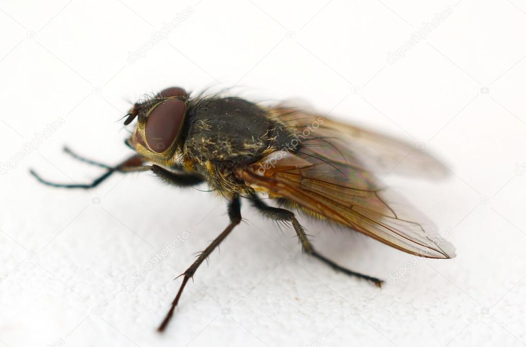 муха на стекле картинки