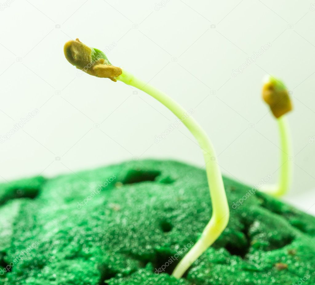Green seedlings growth