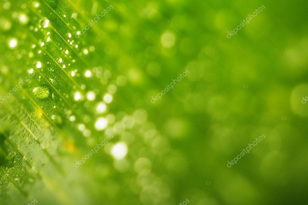 Rain drops and Fresh green leaf texture bacground
