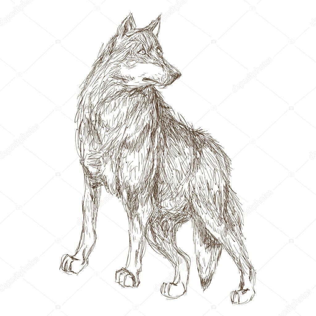 Lobo Dibujo Cara Perfil Icono De Esbozo De Lobo Vector De Stock