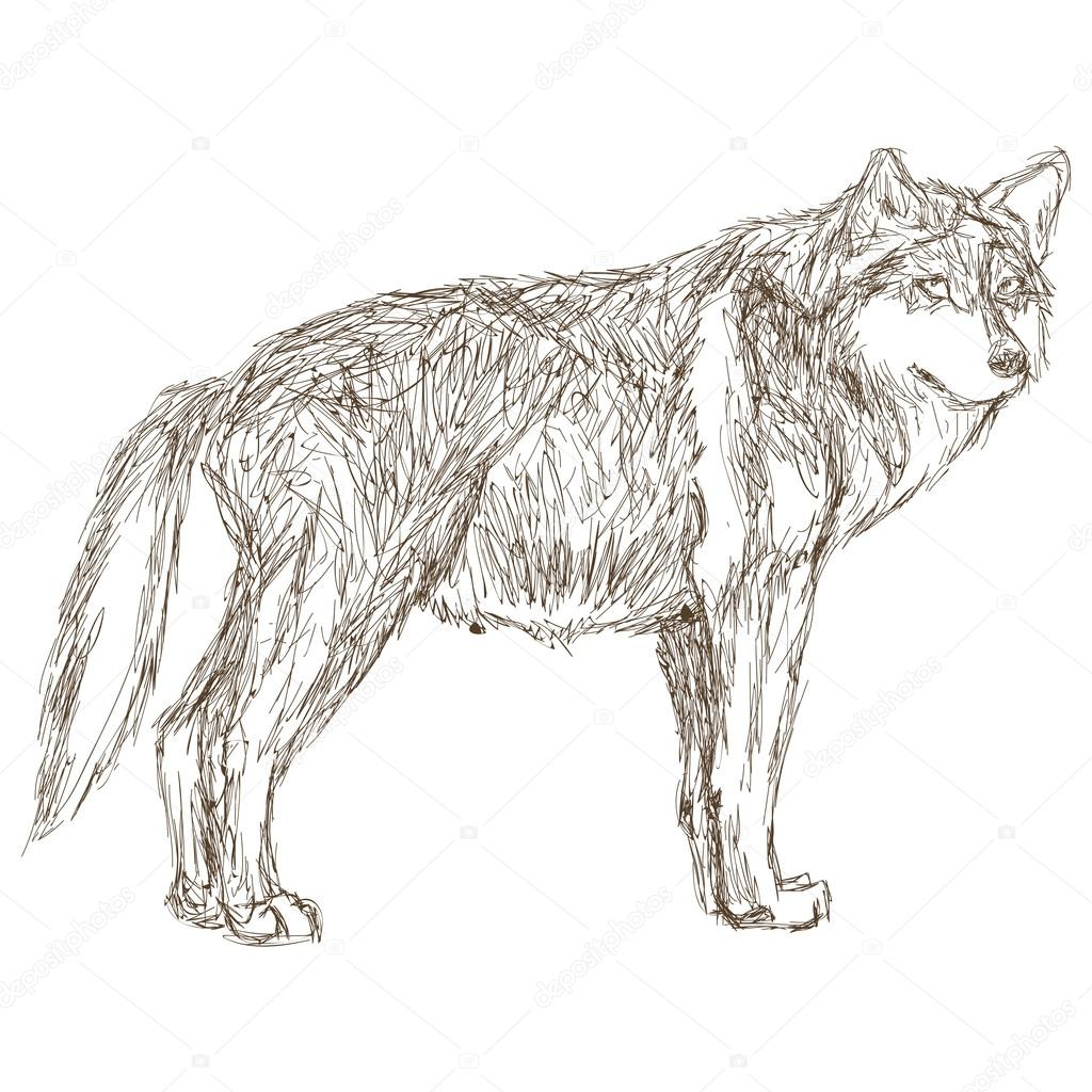 狼の横顔スケッチ アイコン — ストックベクター © jemastock #115250090