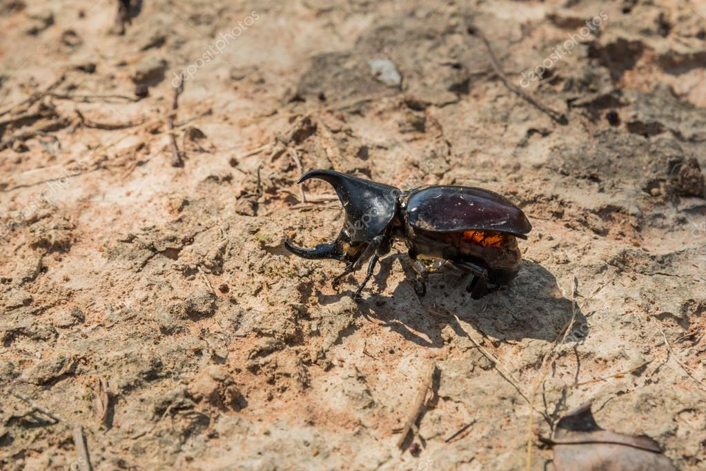 Секс с монстром жуком