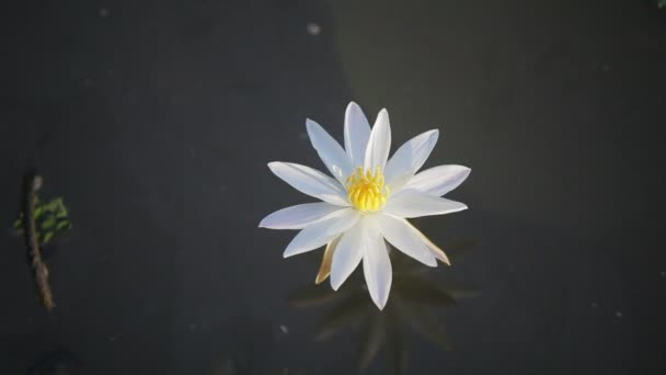 background with beautiful water lily