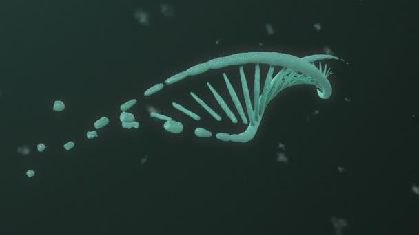 DNA Helix Evolution