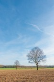 Small and big tree with blue sky