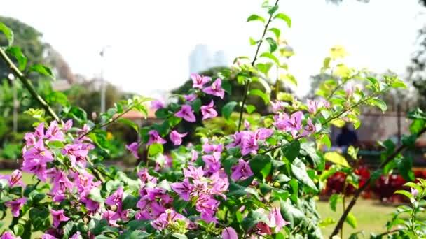 Větve s Lila květy