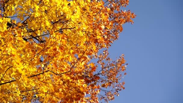 podzimní listí na stromě.