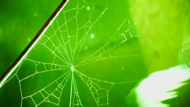 Web na pozadí zelené vody.