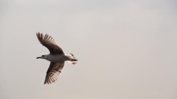 Möwe fliegt in Istanbul