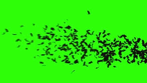 Flock a denevérek. nyáj madarak. misztikus halloween koncepció. zöld képernyő felvétel