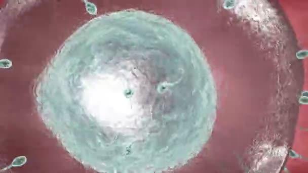 Lidské spermie se blíží lidské vajíčko. 3D vykreslování