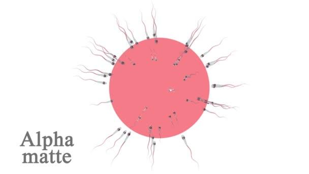 Spermie, spermatozoons okolí vejce, buňky izolované na bílém. Alfa matný zahrnuty. Realistické 3d animace