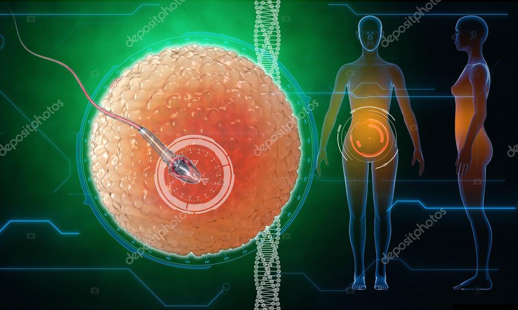 Menschliche Eizelle. Sperma, Spermium, schwimmende, Samenanlage ...