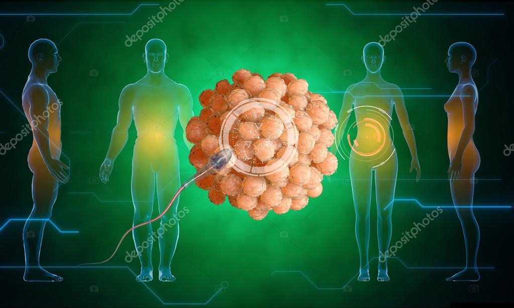 Célula humana de huevo. Esperma, espermatozoide, flotando al óvulo ...