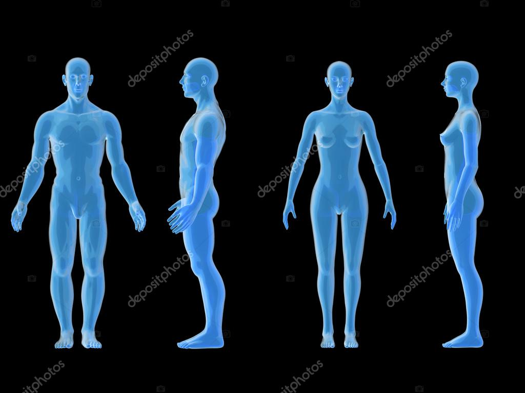 X ray human male female body. Anatomy concept. Isolate, 3d render ...