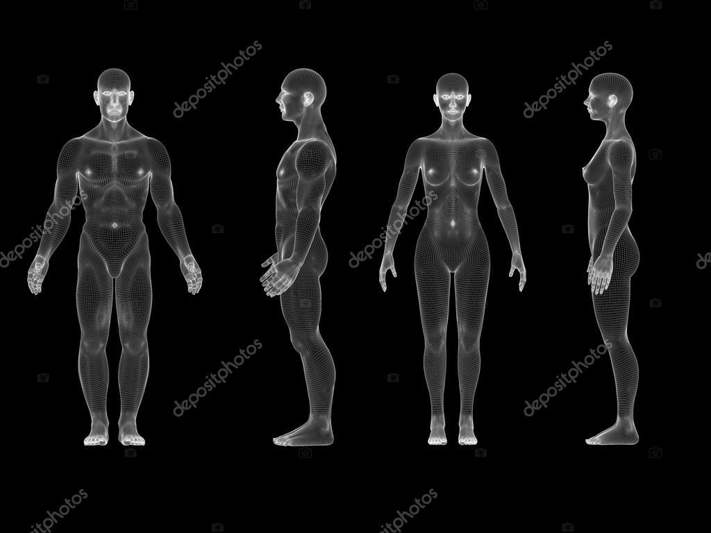 X-Ray menschlichen männlichen weiblichen Körper. Anatomie-Konzept ...