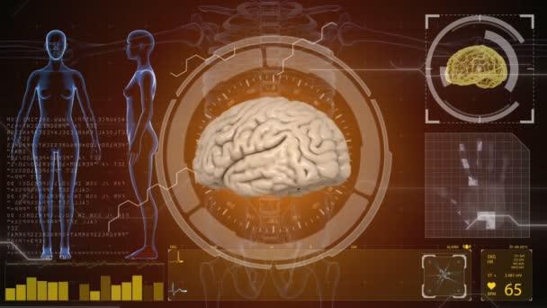 Human anatomy. Human brain. HUD background. Medical concept anatomical future