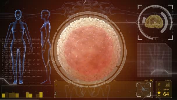 Spermie oplodní vejce buněk. Lékařský koncept anatomické budoucnosti. HUD futuristické zázemí.