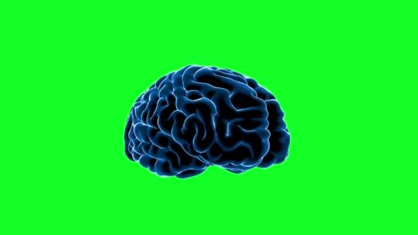 Impulsy mozku. Neuron systém. Lidské anatomie. přenos impulsů a generování informací, zelená obrazovka