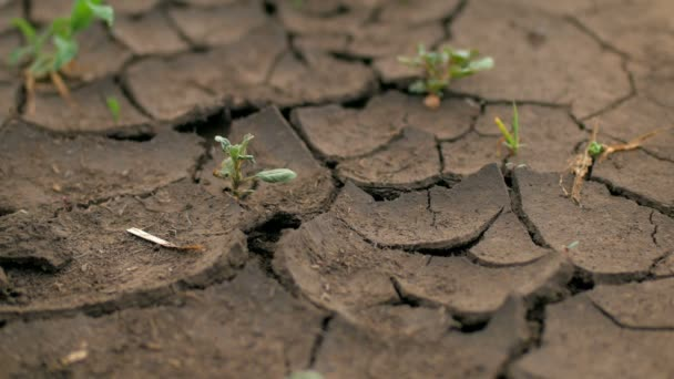 Kleine grüne Pflanzen wachsen durch rissigen Boden