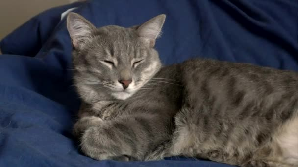 szürke macska alszik egy ágyban 4k