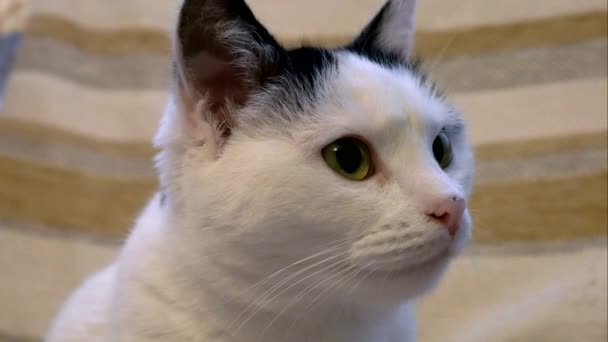 fehér macska úgy néz ki, a kamera 4k