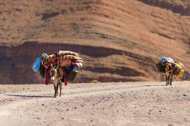 Donkeys used to carry luggage