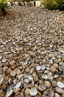 Garden path made from shells
