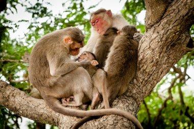 A family of monkeys gather
