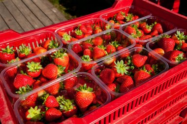 Punnets of strawberries for sale