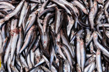 A catch of fresh anchovies