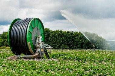 Automated potato irrigation