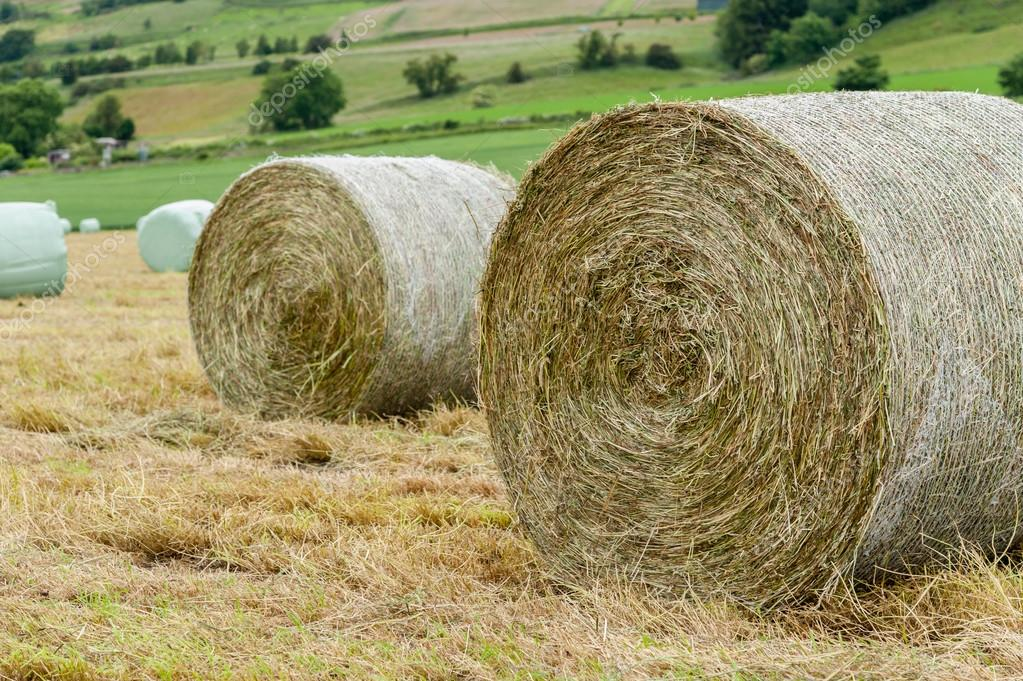 Rolled bales of hay