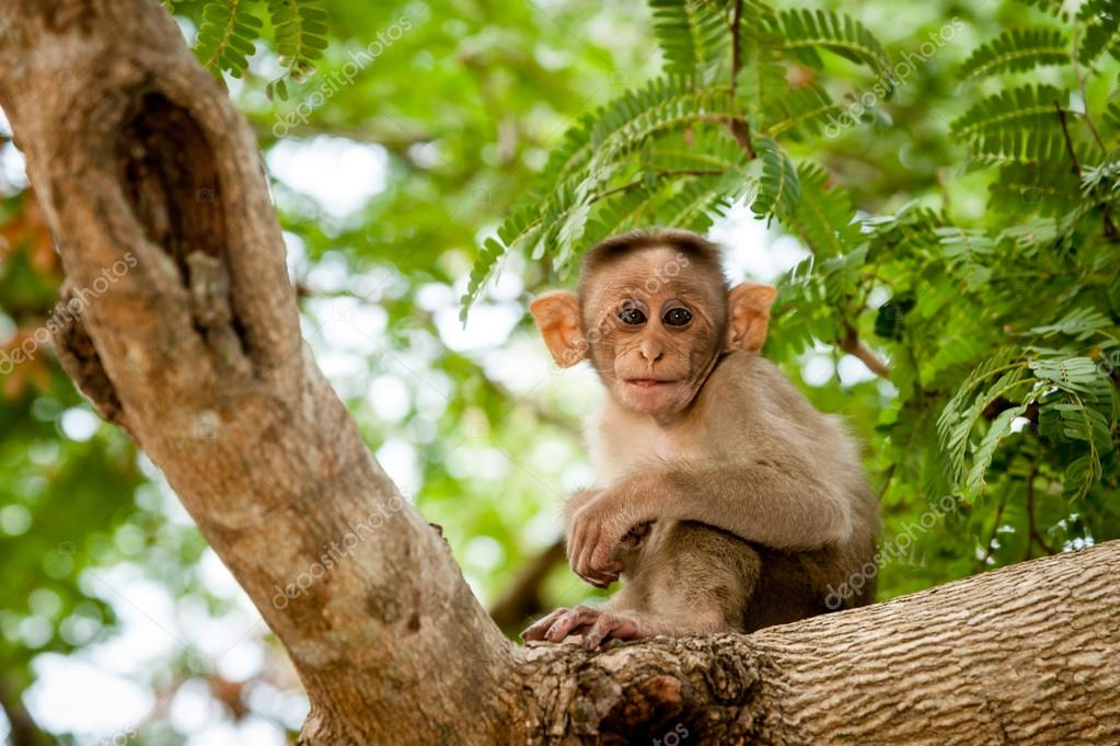 A young monkey on tree