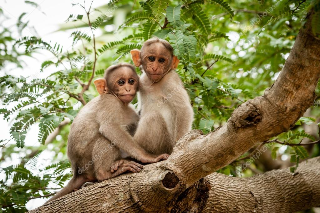 Monkeys on a tree branch