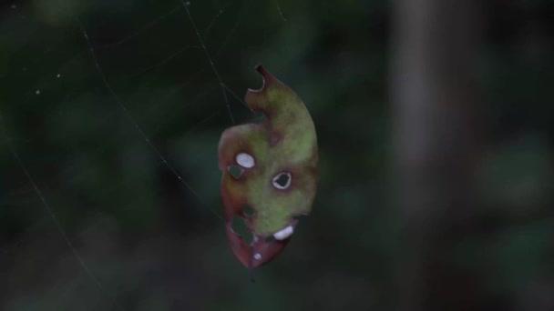 Happy Halloween strašidelné list v pavouci webu, který se zdá mít strašidelné hledá tvář