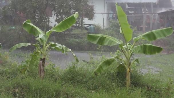 Tropický déšť bouře v Asii