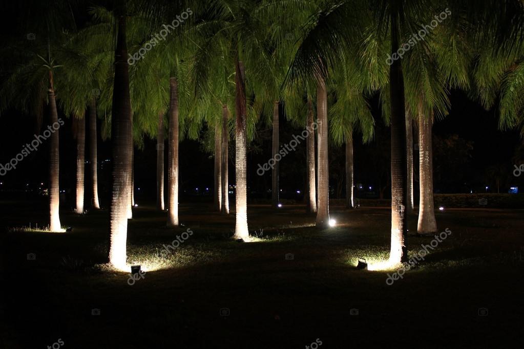 Illuminazione di alberi nel parco pubblico di notte — Foto Stock © alaskla #87171870