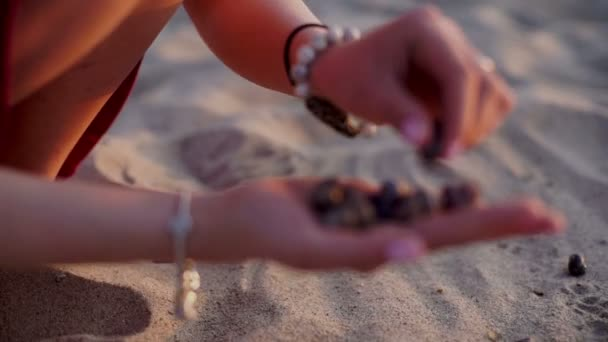 Teenage Girl Hold Up Shells which Collected On Beach, sunset In Background