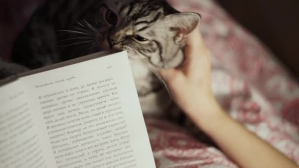 Young girl reading a book with her cat at home