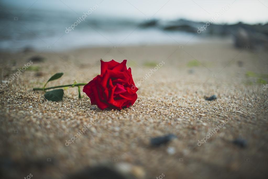 Rosa Sulla Sabbia Di Mare Foto Stock Khanrisk 87119468