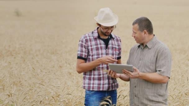 Dvou zemědělci pracují s tabletem. Postavení na poli pšenice, studium klásky