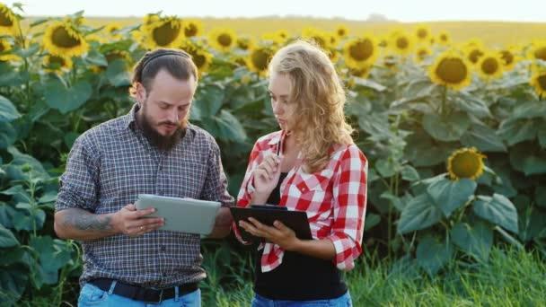 Farmář muž a žena má asi pole slunečnic. využití tabletu. Žena bere poznámky