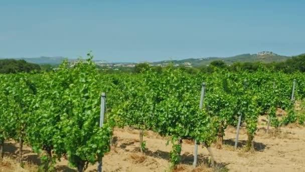 Velké vinice ve Španělsku: Katalánsko