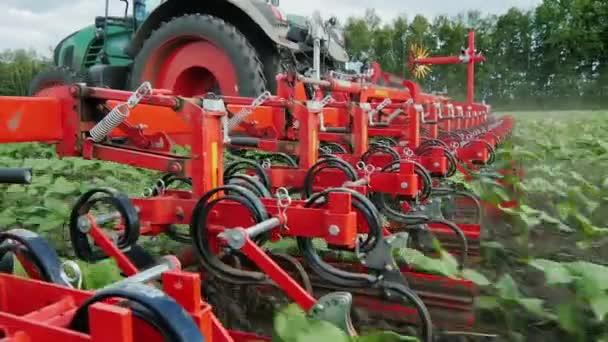 Steadicamnél lövés: traktor bukkan napraforgó hajtások. Ökológiai mezőgazdaság