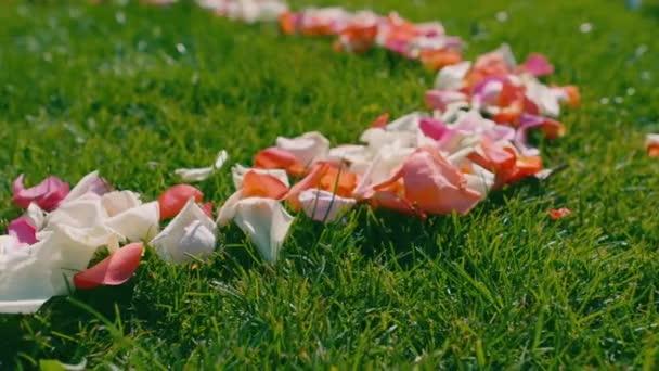 Una scia di petali di rose rosse, bianche e rosa su erba verde prima di un matrimonio