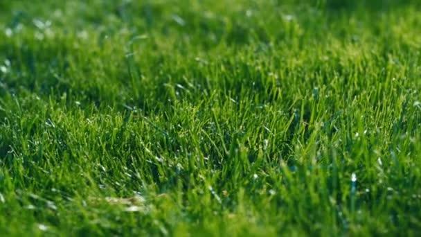 zelené trávy pro pozadí