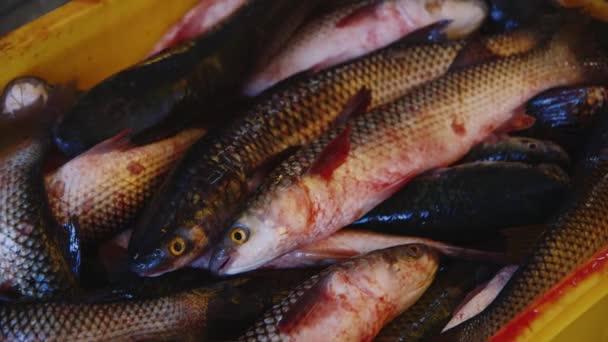 Tolstolobik v krabicích v továrnu na zpracování ryb